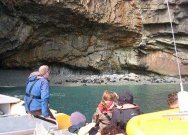 Seal colony seen on Venture Jet wildlife tour