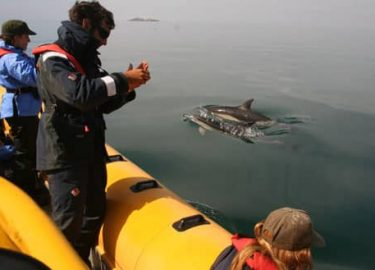 Common dolphins alongside Venture Jet boat off Grassholm Island Pembrokeshire