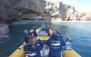 Seal watching in Venture Jet jet boat wildlife adventure