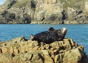 Bull seal sunbathing on Venture Jet family dog friendly wildlife tour